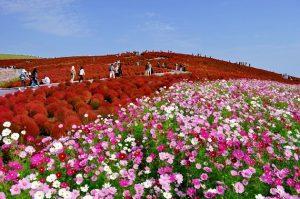 Thưởng lãm 3 vườn hoa hương sắc nhất nước Mỹ
