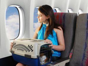 Hành khách có được mang vật nuôi lên máy bay không?