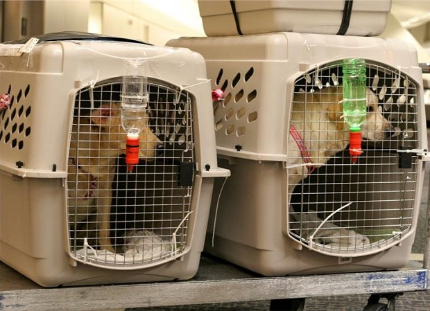 Hành khách có được mang vật nuôi lên máy bay không]